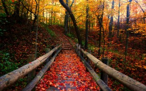 autumn-free-wallpaper-autumn-path_2560x1600_93197