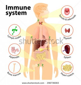 stock-photo-immune-system-human-anatomy-human-silhouette-with-internal-organs-296736083